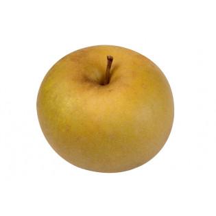 Pomme bio reinette grise canada, vergers de la champagne, ferme fruitière cap sud, avessac, pays de redon, loire atlantique