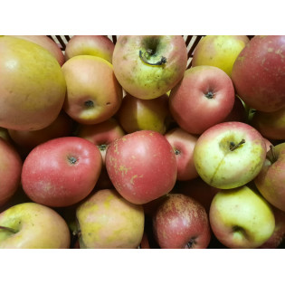 Pommes BIO Fuji 1 kg