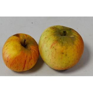 Pommes Bio variété Reine des reinettes 1kg