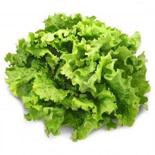 Salade Bio, l'unité